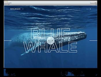 Unsere Website der Woche KW31 19 savewhales